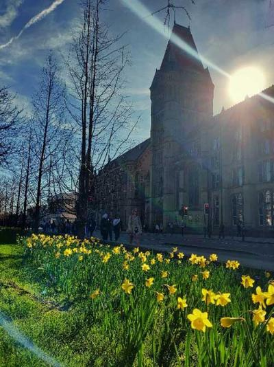 A view along Oxford Road, Manchester, with daffodils in the foreground and the Whitworth building in the background