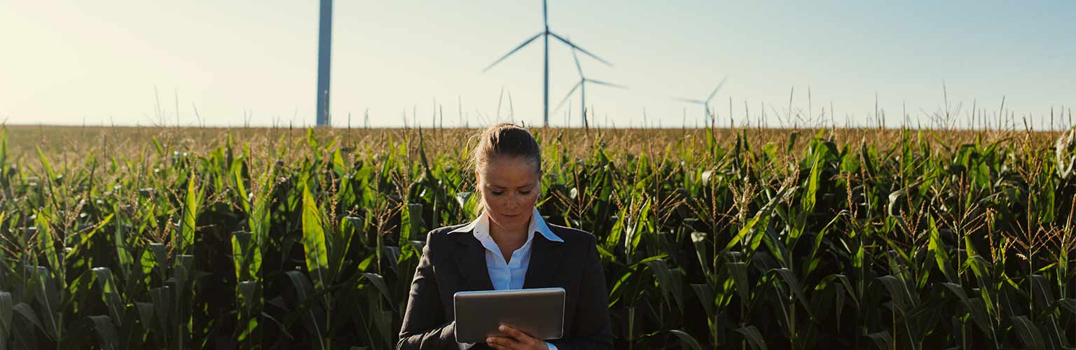 A business woman with a tablet in a field with a wind farm in the background